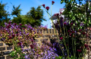 Garden Maintenance in Wimbledon