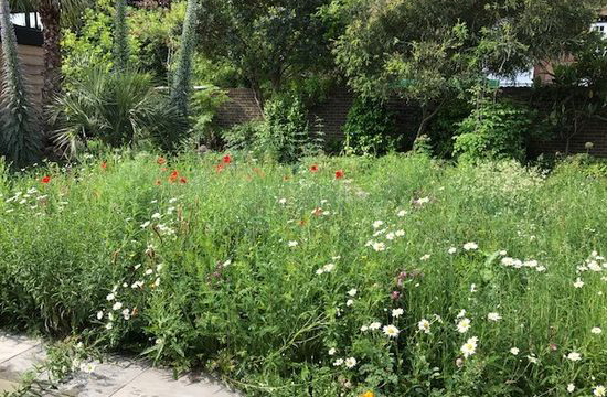 Garden Maintenance in Chiswick
