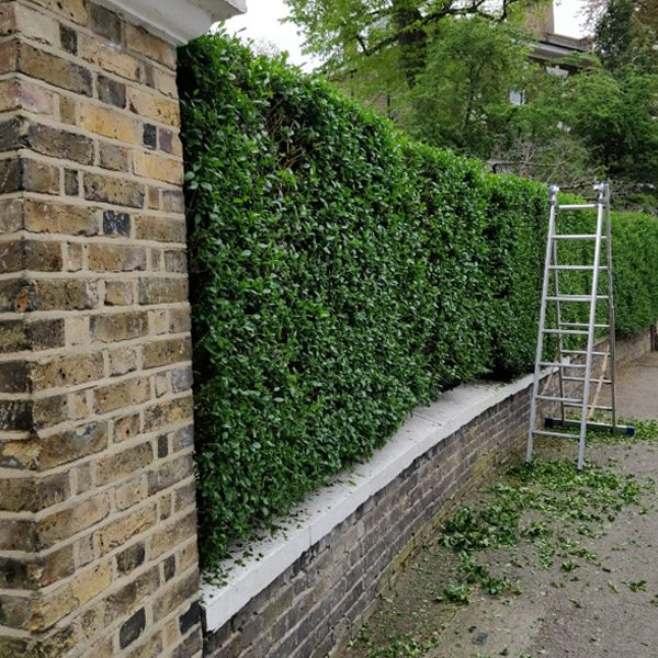 Hedge-cutting and shaping