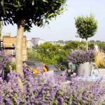 Allsop place garden - autumn gardening tips