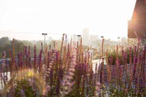 allsop place garden - autumn has arrived
